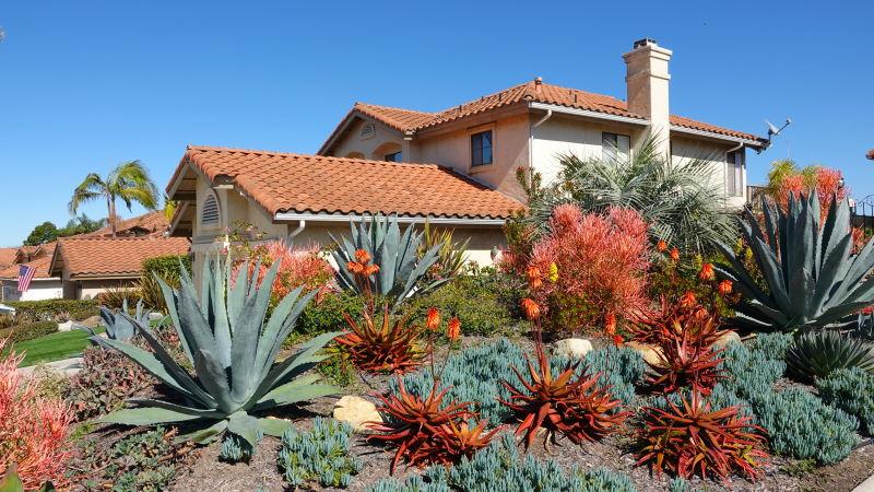 Desert landscaping in Las Vegas